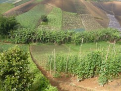 Alternative Agricultural Investments To Be Showcased At Agri Investment LATAM 2015