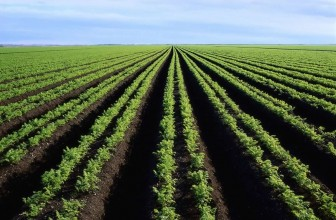 South African agriculture minister addresses Africa's principal fertilizer conference