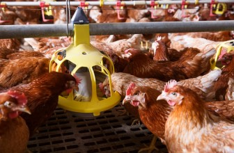SECOND OUTBREAK OF AVIAN INFLUENZA ON ANOTHER ASTRAL POULTRY BREEDING FARM