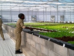 Botswana farmers look to hydroponic farming to help alleviate the horticultural sector
