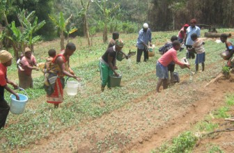 Irrigation turns drought to cash for Cameroon's vegetable farmers