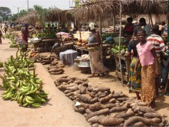 Agribusinesses and African Smallholders Seize $1 Trillion Food Market as Meals Replace Minerals to Restart African Economic Growth, New Report