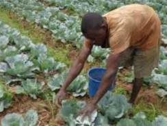 The Democratic Republic of the Congo and IFAD partner for better nutrition and resilience for small-scale farmers facing COVID-19