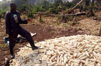 Ugandan government introduces US $27m for excess maize stock