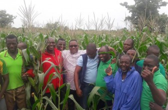 Farms recovering from army worm invasion – Agric ministry