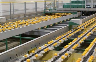 Sorting, grading, packing machines and equipment for Fresh Fruit