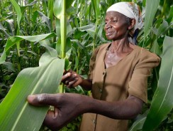 New US $280 Million Partnership for Inclusive Agricultural Transformation in Africa Launched