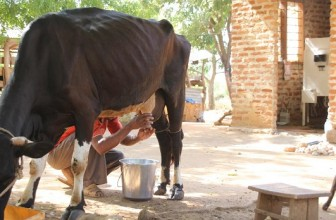 Biogas-Powered Milk Chiller for Small-Scale Dairy Farmers in Eastern Africa