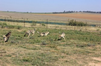 DAWN Group helps wolf sanctuary with a water-supply pipe system