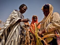 U.S $500 Million Invested In Agriculture Sector