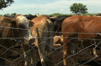 Movement of cattle suspended