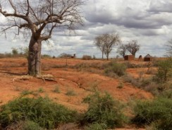 Land degradation, causes and effects