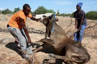 SA Land Bank offers concessional loans to drought-hit farmers