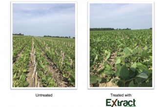 Releasing Nutrients from Cover Crop Skeletons with Extract PBA