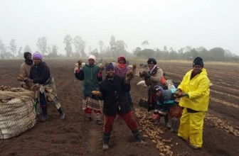 Black farmers of Eastern Cape reap harvest of success