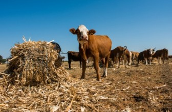 South Africa's Land Bank offers concessional loans to drought-hit farmers