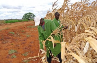 South Africa to experience 2% higher yields in maize production