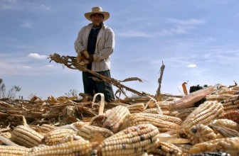 Kenya plans to import maize from Mexico