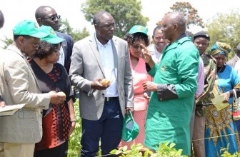 Farmers urged to plant potatoes to earn more, end hunger