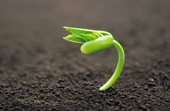 Amiran Hybrid Seed, Your Solution for an Advanced Crop Yield