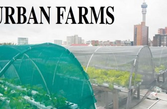 Johannesburg space saving roof-top gardens offer food relief