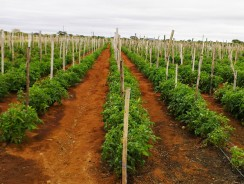 African agricultural land becoming more attractive to investors