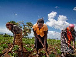 Champions for Nutrition, Food Security and Agribusiness Named Winners of 2017 Africa Food Prize.