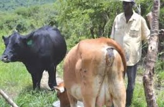 The State secures lab equipment to increase livestock production