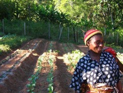 Learn lessons from success to beat malnutrition in Africa, advise experts