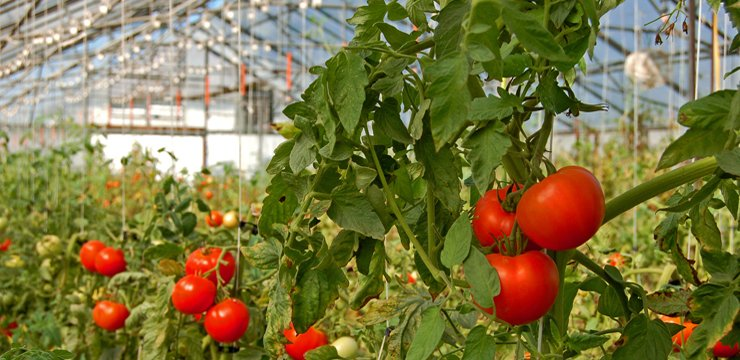 Horticulture sector a sleeping giant in Zimbabwe