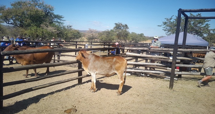 Livestock revival mooted in Zimbabwe
