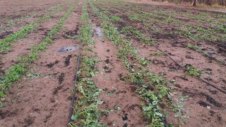 Zimbabwe government leaves un-insured farmers in the cold