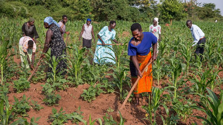Working the land in Uganda: women make up more than half of Africa's farmers but face the biggest barriers to owning land