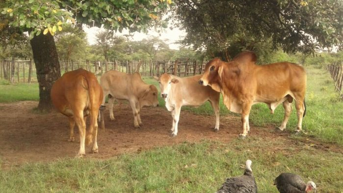 Latest livestock services, farming innovations and skills training at Agritech Expo Zambia in Chisamba in April!