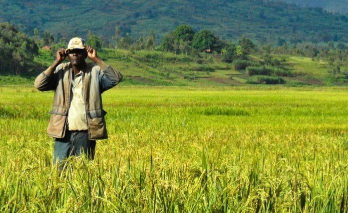 Dangote Inaugurates Multi Billion Naira Rice Processing Plant in Jigawa…Promises to End Rice Importation