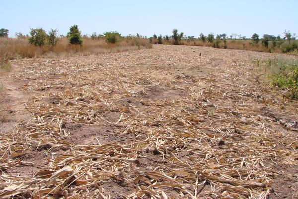 Zambia to revoke 35 000 land offer letters