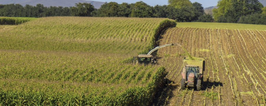 An Improvement in SA Summer Crop Production Estimates