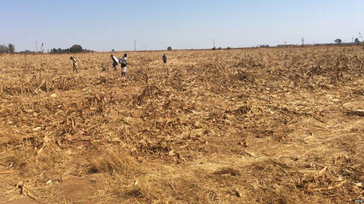Zimbabwe: Vast tracks of land lying idle