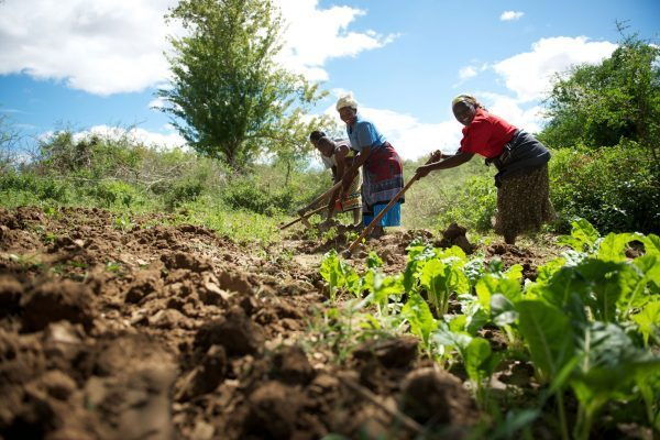 Foreigners cash in on weak Zambian land policies, says lobby group