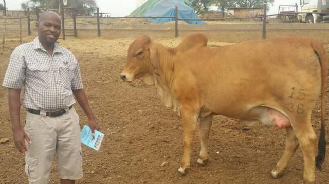 Zimbabwe : Command livestock take shape