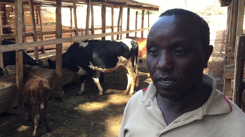 Brookside to train Kenyan dairy farmers on milk quality