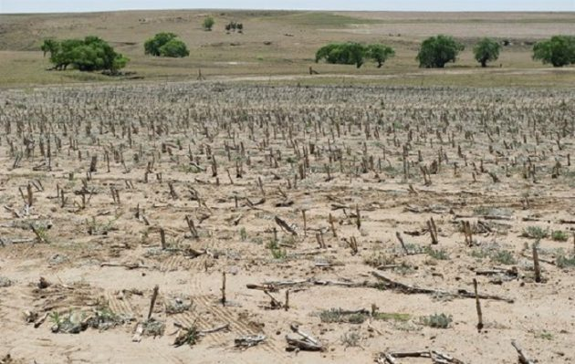 Negative effects of Western Cape drought on South Africa's agricultural economy