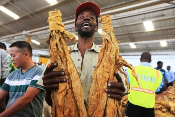 Zimbabwe's tobacco production at an all-time high of 207m kg