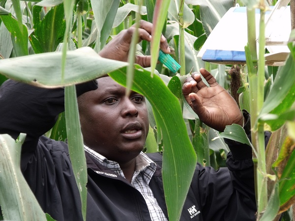 Space-age technology for fight against crop-devastating pest outbreaks in Kenya launched by UK-based CABI and UK Space Agency