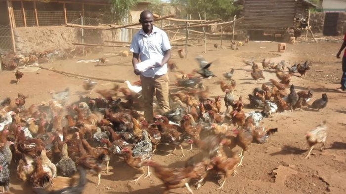 Harnessing the potential of indigenous knowledge system (IKS) in rearing of indigenous chickens