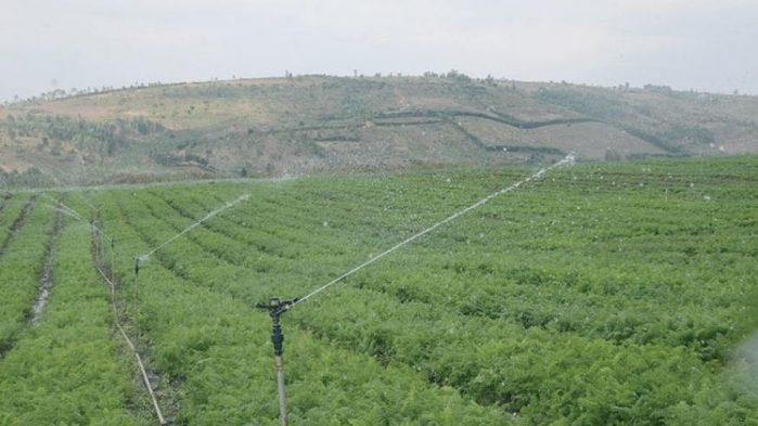 Farm irrigation during dry season