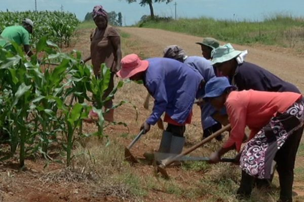 AGH and AFGRI announce structure to support mentorship and training of farmers
