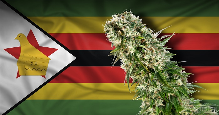 Zimbabwe Finance Minister backs calls for cannabis growth for export