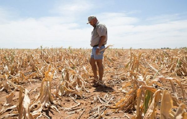 AgriSA to source US $220m for farmer hit by severe drought in South Africa