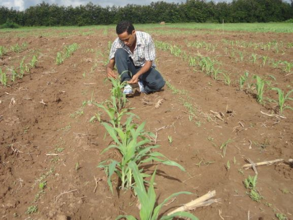 New study identifies Nigeria as leading seed hub in Western and Central Africa